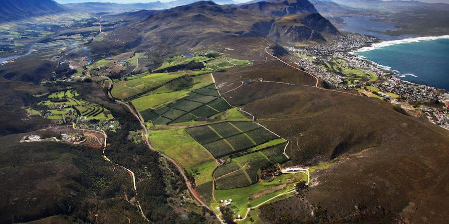 Hamilton Russell – Sydafrikanske topvine med terroir