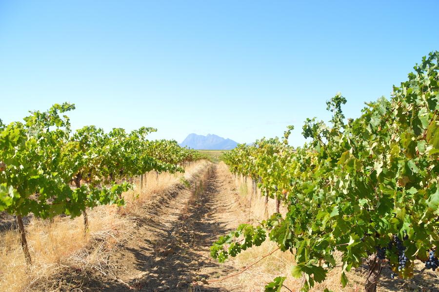 Kom med en tur til Sydafrika, og læs om, hvordan salg af vin skal blive til brønde.