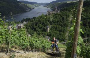 Kom godt i gang med tysk vin