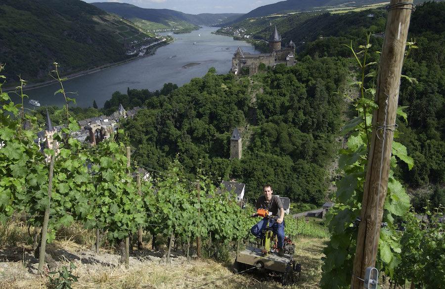 tysk vin
