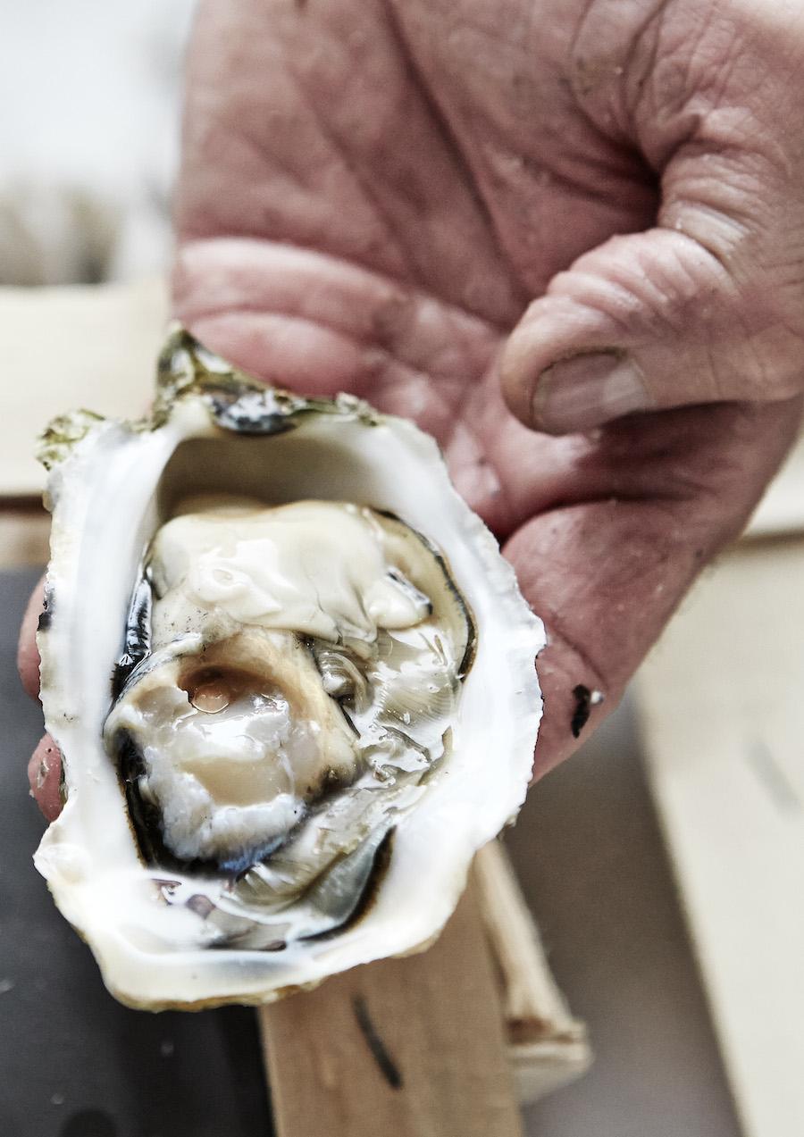 Store og kødfulde var de franske østers fra producenten Gillardeau. Foto: Flemming Gernyx.