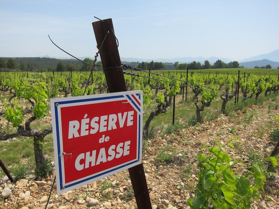 Réserve du chasse - jagtreservat. Der er en del vildsvin i området, som ynder at guffe friske, solmodne druer; det sætter vinbønderne personligt en stopper for...