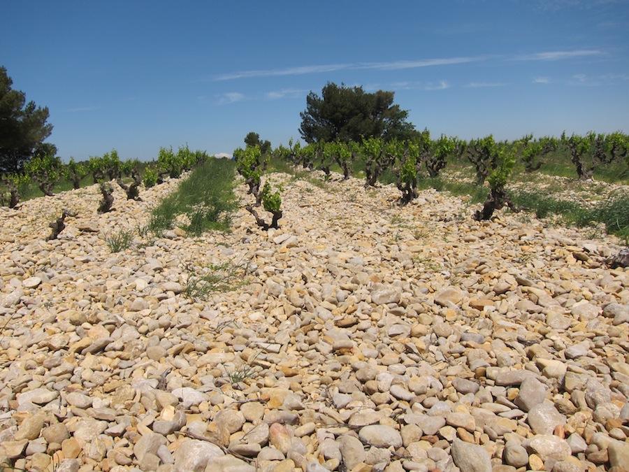 Mange vinmarker i Rasteau er dækket af sten, som holder på varmen. De mange sten kommer oprindeligt fra de omkringliggende floder.