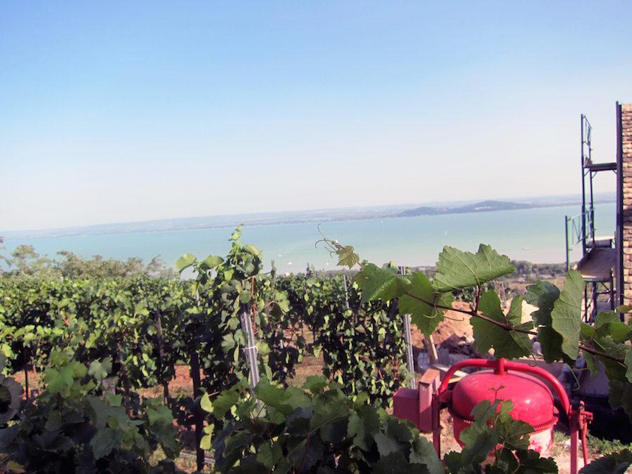 ungarsk vin
