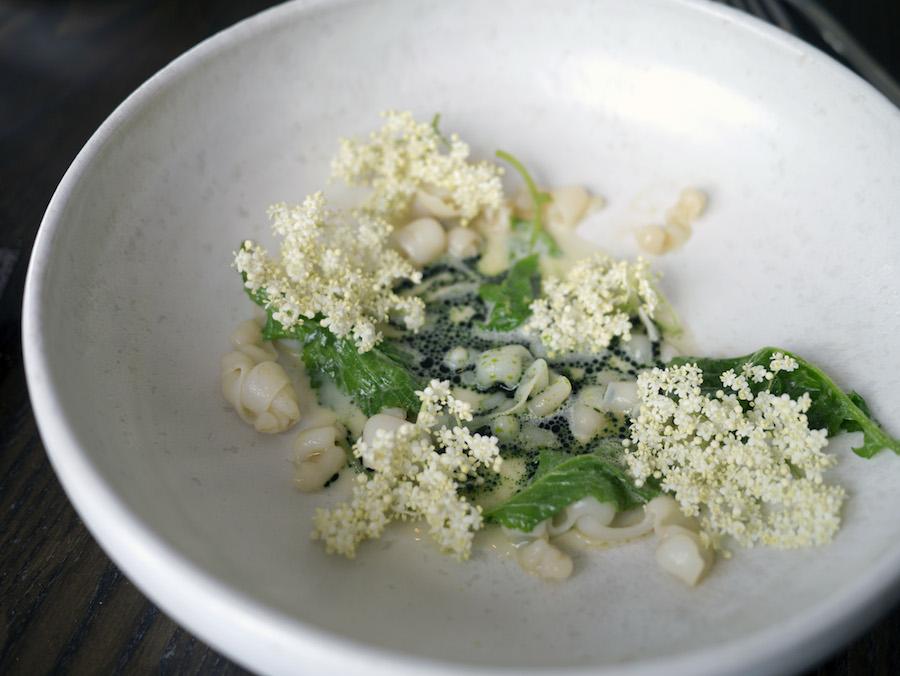 Blæksprutte, hyldeblomst, muslingesauce.