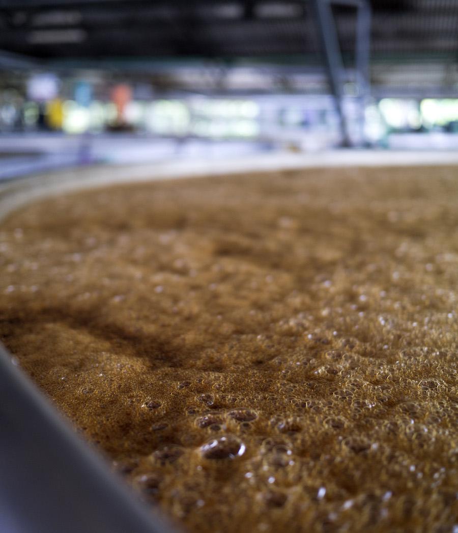Sukkermelassen gæres til et niveau på otte procent alkohol, inden det destilleres.