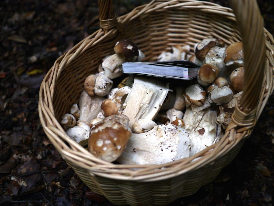 Den endelige fangst, godt 2,5 kilo svampe.