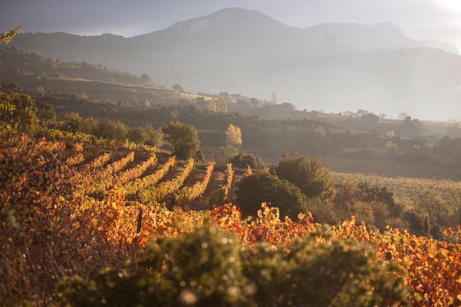 Udsigten over nogle af Remelluris marker i Rioja.