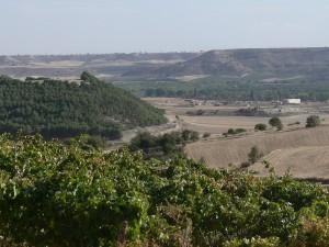 Ribera del Duero – smagen af succes