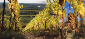 Kovács Nimród Winery: Fra flygtning til vinproducent